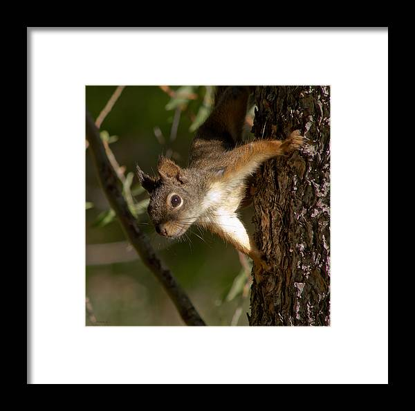Good Morning Framed Print featuring the photograph Good Morning by Mitch Shindelbower