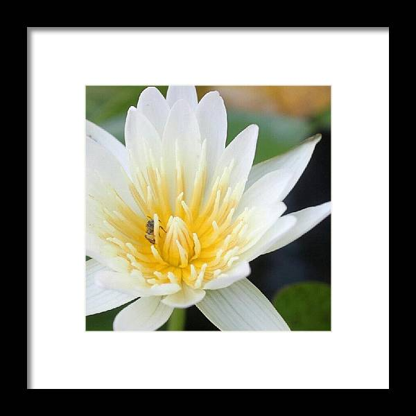 Good Night #lotus #bee #flower #nature Framed Print by Tsuyu Su