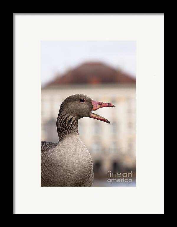 Bavaria Framed Print featuring the photograph Goose At Nymphenburg Palace by Andrew Michael