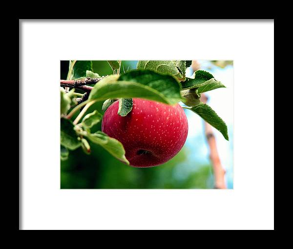 Apple Framed Print featuring the photograph Gorgeous Red Apple by Pamela Muzyka