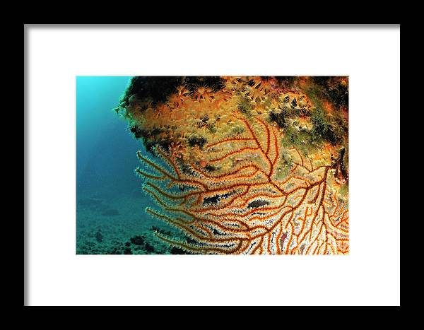 Mystery Framed Print featuring the photograph Gorgonian Fan And Ocean Floor by Sami Sarkis