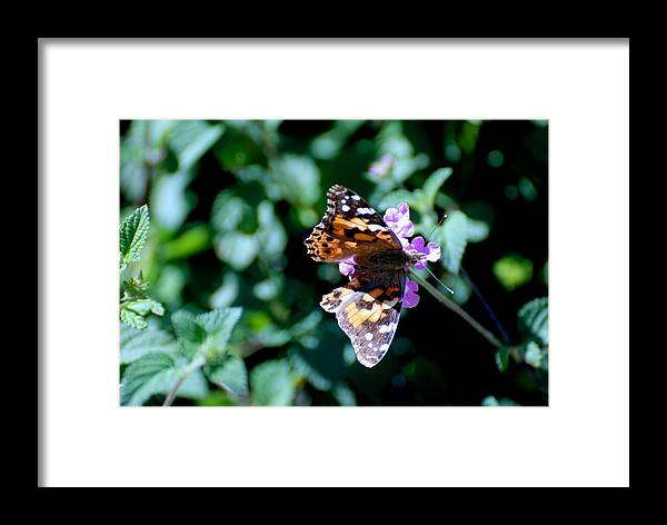 Butterfly Framed Print featuring the photograph Got It Covered by Eric Tressler