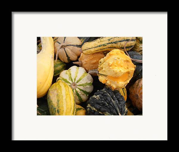 Gourds Framed Print featuring the photograph Gourds by Kimberly Perry