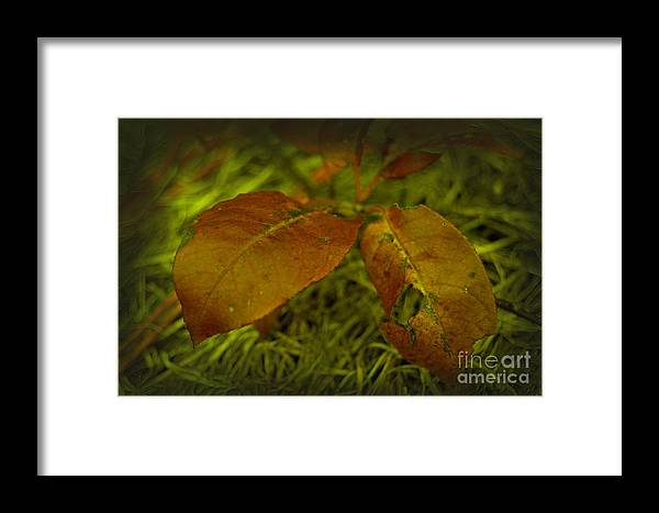 Leaf Framed Print featuring the photograph Graceful Age by The Stone Age
