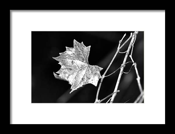 Grape Vine Framed Print featuring the photograph Grape Vine by Christine Stonebridge