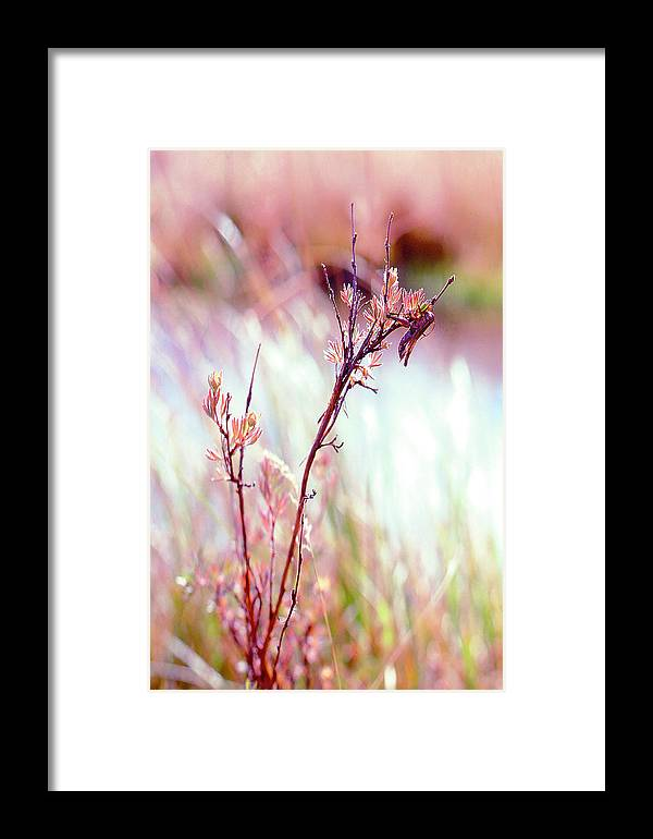 Grasshopper Framed Print featuring the photograph Grasshopper by Dena Baker