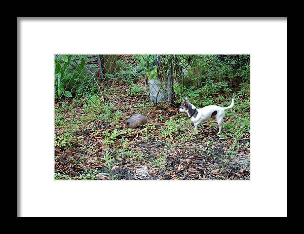 Framed Print featuring the photograph Grat Hunter by Katrina Johns