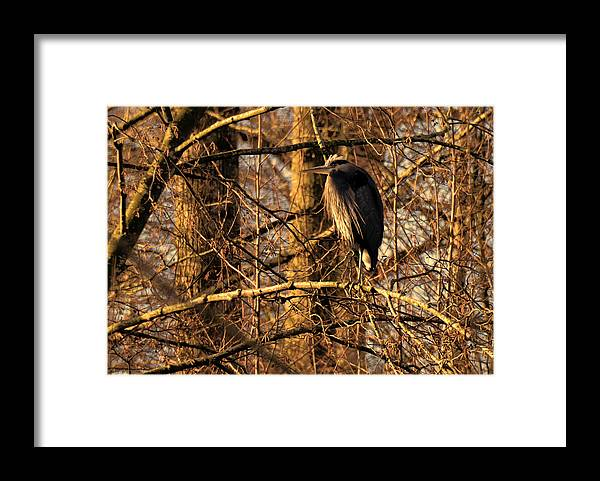 Ladner Framed Print featuring the photograph Great Blue Heron at Dusk by Lawrence Christopher