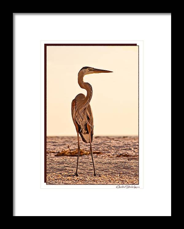 Great Blue Heron Framed Print featuring the photograph Great Blue Heron by Christine Stonebridge