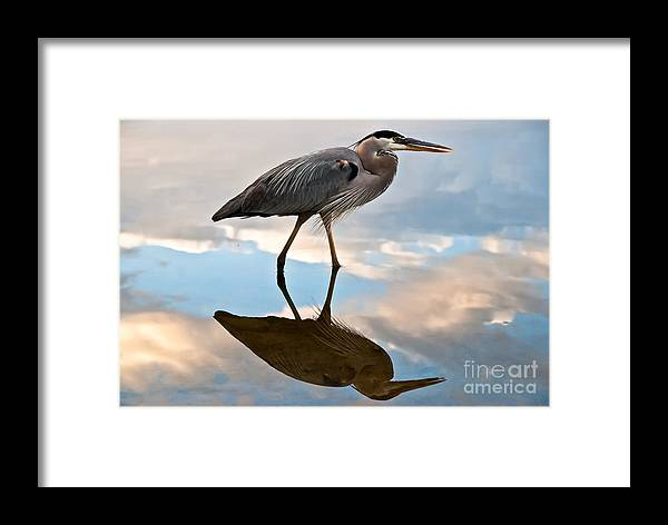 Florida Framed Print featuring the photograph Great Blue Reflections by Luna Jade