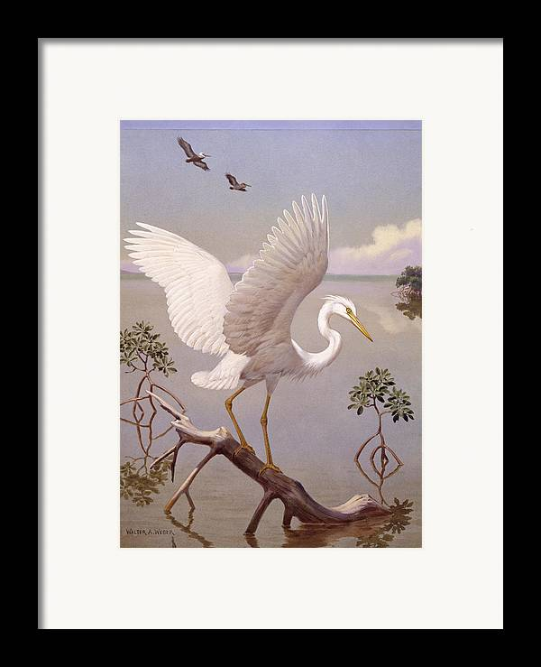 Illustration Framed Print featuring the photograph Great White Heron, White Morph Of Great by Walter A. Weber