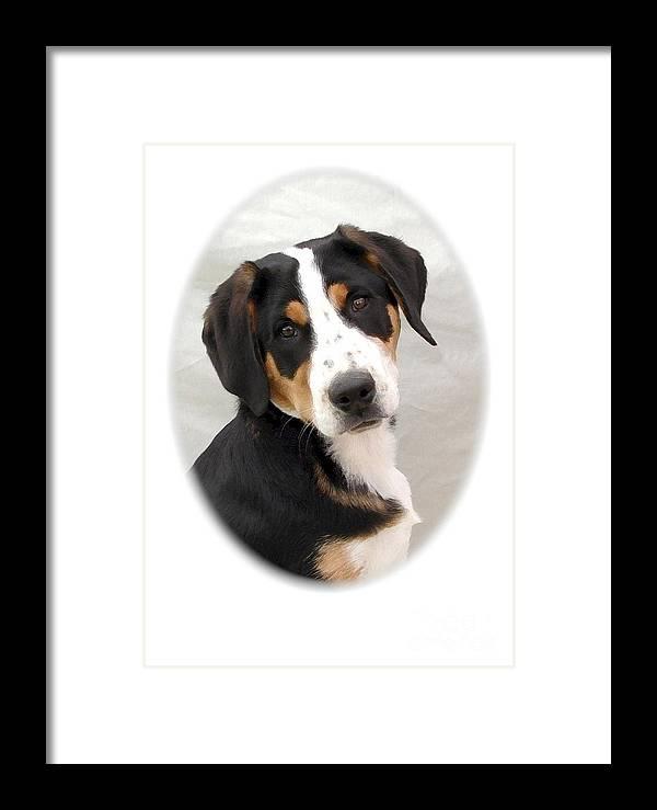 Greater Swiss Mountain Dog Digital Art Framed Print featuring the digital art Greater Swiss Mountain Dog 1255 by Larry Matthews