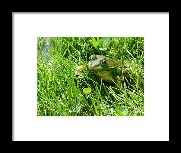 Green Framed Print featuring the photograph Green by Christine Stack