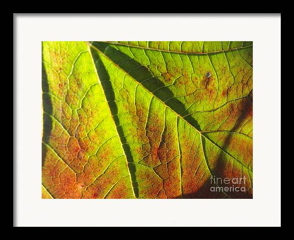 Leaves Framed Print featuring the photograph Green Days Past by Trish Hale