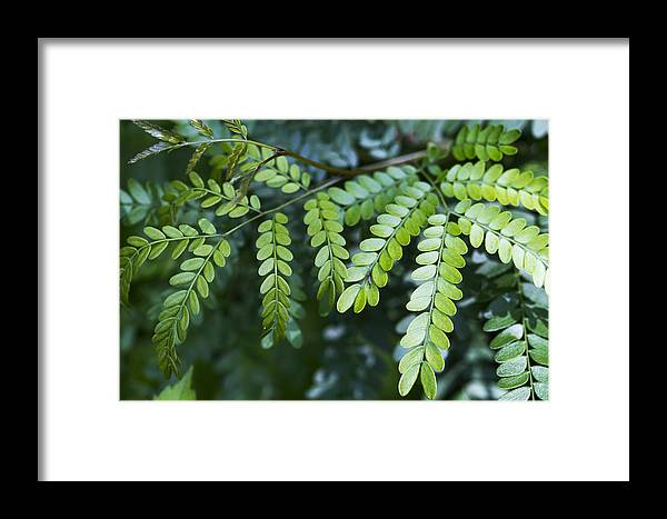 Green Framed Print featuring the photograph Green by Kathy Clark