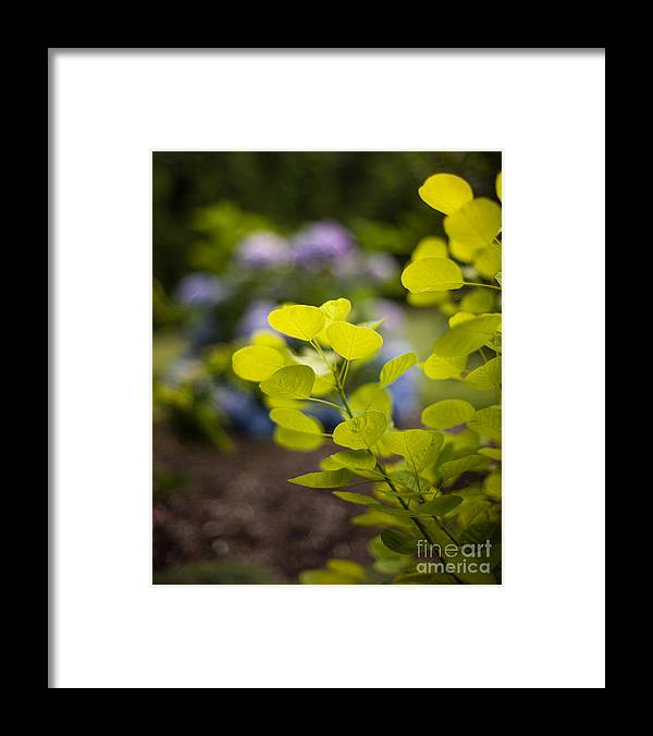 Flower Framed Print featuring the photograph Leaves Illumination by Mike Reid