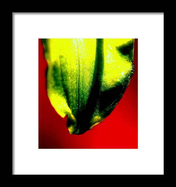 Green Framed Print featuring the photograph Green Tear by Konstantine Bak