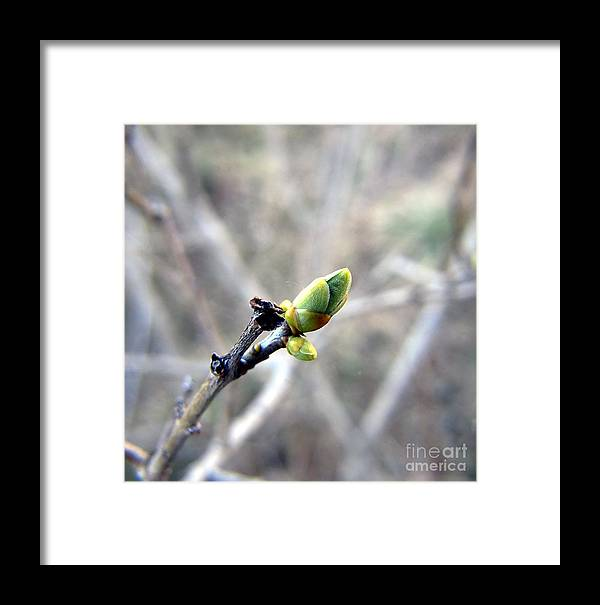 The Nature Framed Print featuring the photograph Greennnn Spring by Yury Bashkin