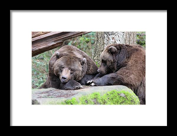 Northwest Trek Framed Print featuring the photograph Grizzley - 0001 by S and S Photo