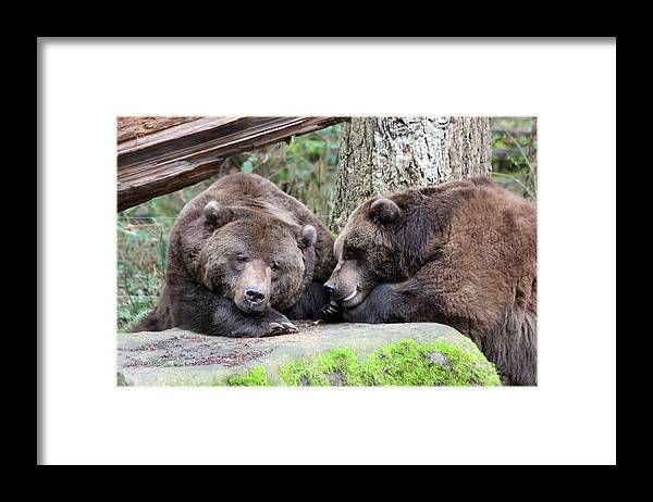 Northwest Trek Framed Print featuring the photograph Grizzley - 0002 by S and S Photo
