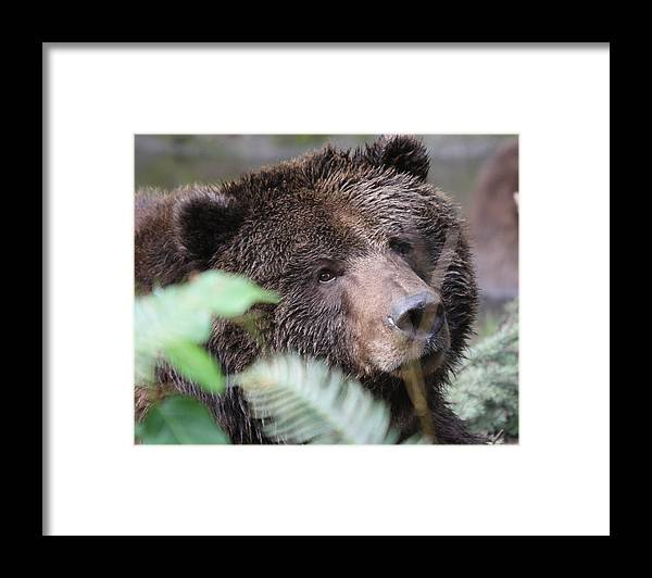 Northwest Trek Framed Print featuring the photograph Grizzley - 0005 by S and S Photo