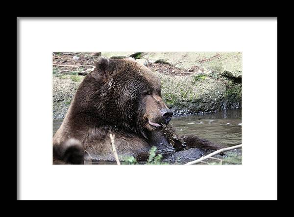 Northwest Trek Framed Print featuring the photograph Grizzley - 0008 by S and S Photo