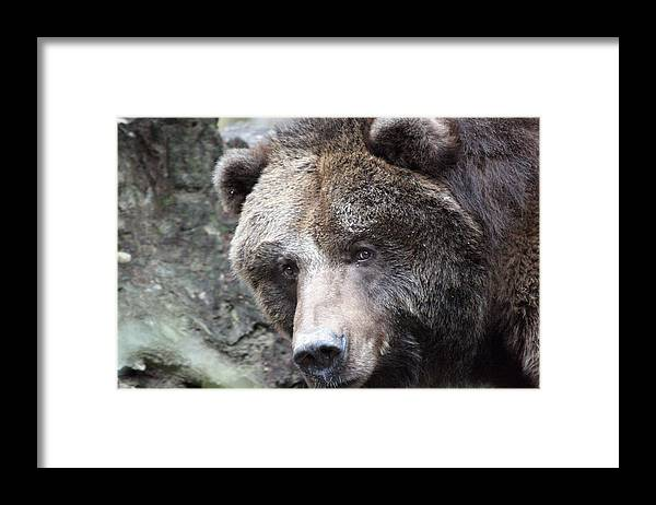 Northwest Trek Framed Print featuring the photograph Grizzley - 0015 by S and S Photo