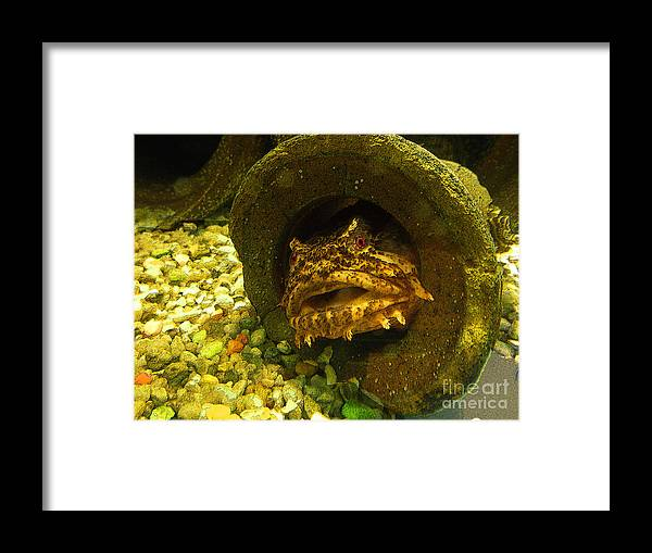 Spotted Scorpionfish Framed Print featuring the photograph Grouchy by David Klaboe