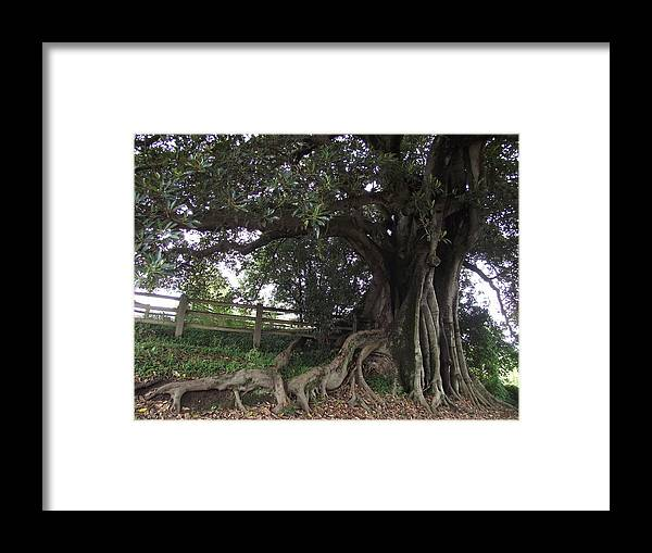 Tree Framed Print featuring the photograph Growing Strong by Rani De Leeuw