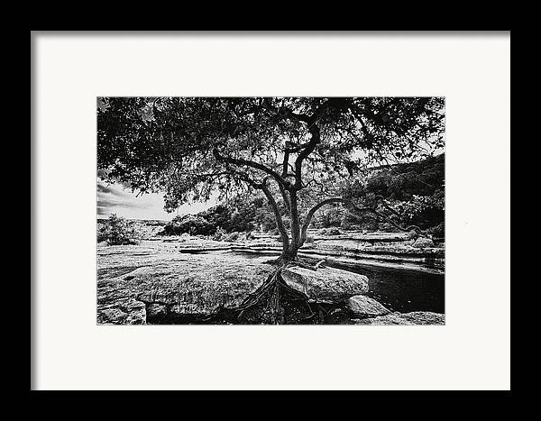 Still Life Framed Print featuring the photograph Grown Into The Rock by Lisa Spencer