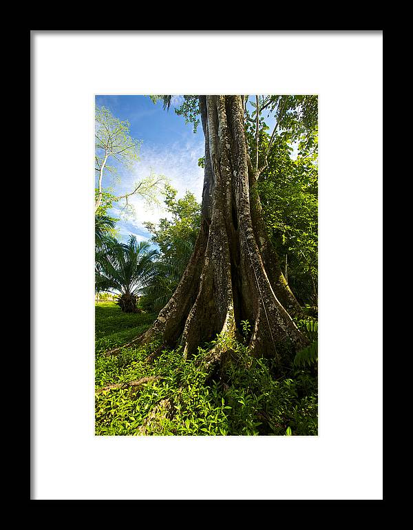 Tree Framed Print featuring the photograph Guardian by Simone Pastore