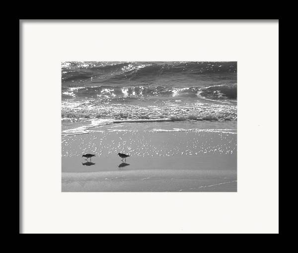 Beach Framed Print featuring the photograph Gulls Taking A Walk by Cindy Lee Longhini