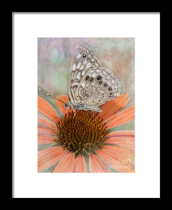 Butterfly Framed Print featuring the photograph Hackberry Emplorer Butterfly by Betty LaRue