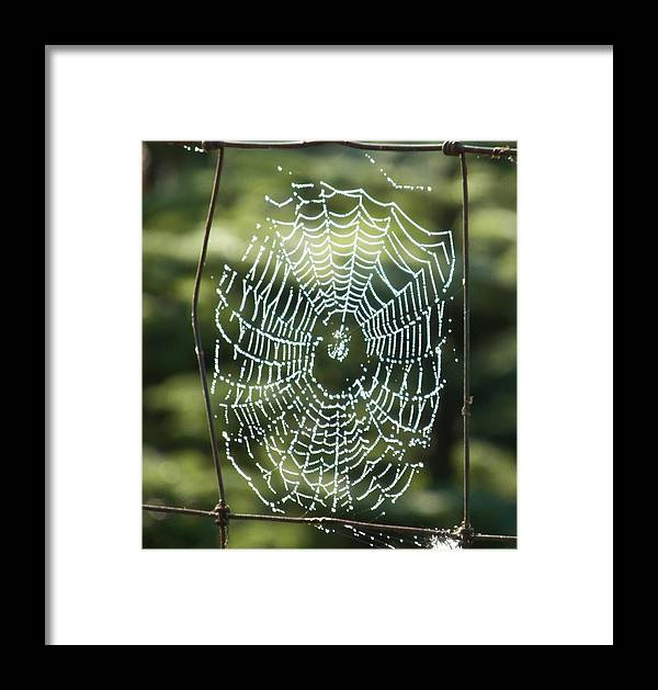 Canvas Photography Prints Framed Print featuring the photograph Halloween Lace by Laurie Kidd