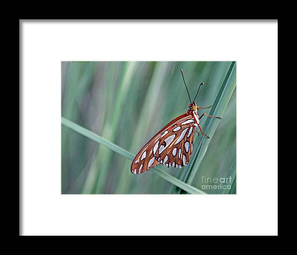 Butterfly Framed Print featuring the photograph Handsome Fellow by Kim Yarbrough