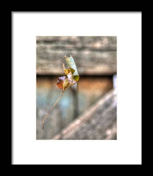 Leaf Framed Print featuring the photograph Hangin' By A Thread by Jerri Moon