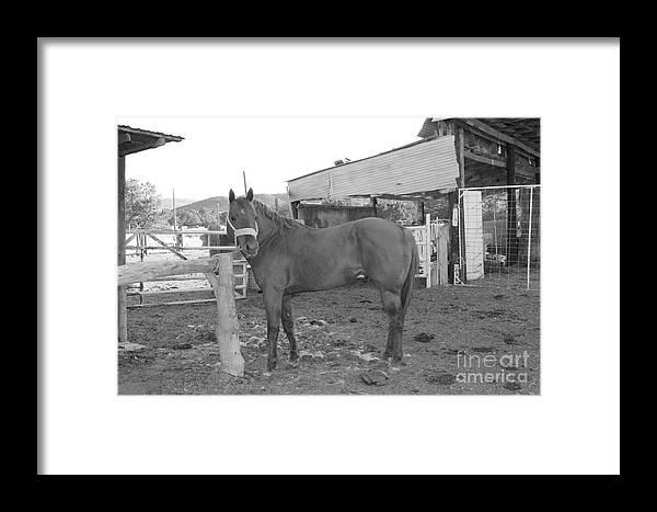 Hank Framed Print featuring the photograph Hank by Pamela Walrath