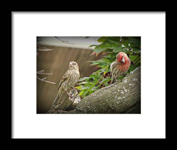 Bird Framed Print featuring the photograph Happy Couple by Brenda Conrad