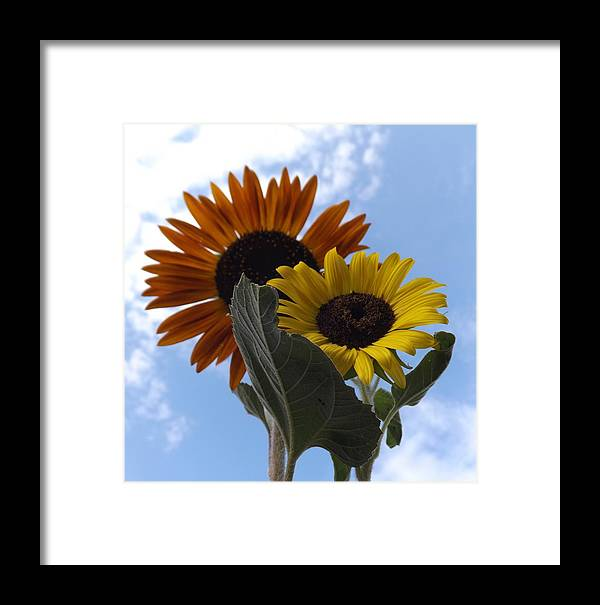 Happy Couple Framed Print featuring the photograph Happy Couple by Elizabeth Sullivan