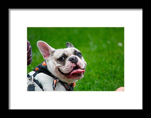 Dog Framed Print featuring the photograph Happy Dog by Stephen Tunis