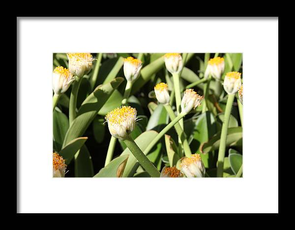Flowers Framed Print featuring the photograph Happy Flower Forest by Andrea Lynch