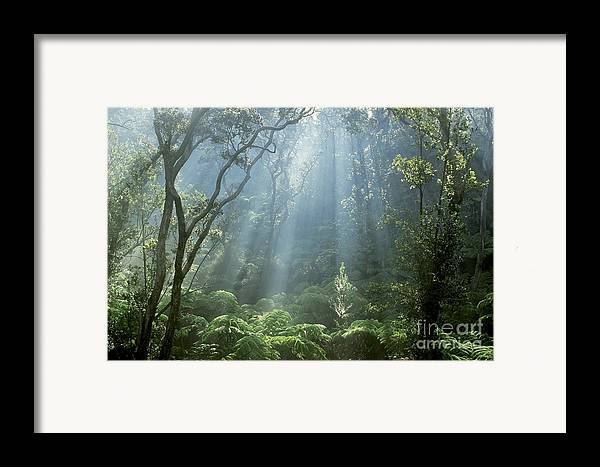 Plant Framed Print featuring the photograph Hawaiian Rainforest by Gregory Dimijian MD