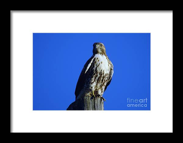 Avian Framed Print featuring the photograph Hawkeye by Jeff Swan