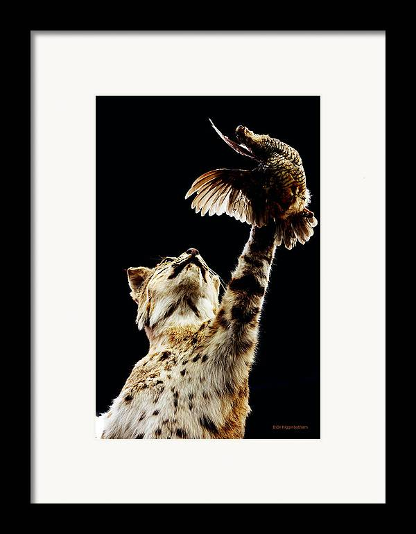 Bobcat Framed Print featuring the photograph He Got Away by DiDi Higginbotham