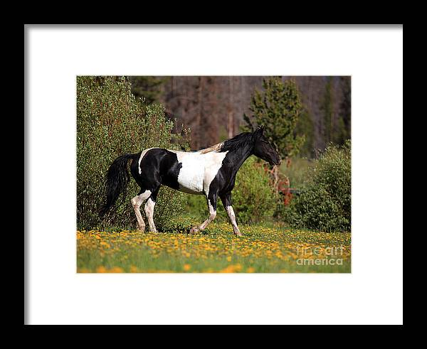 Horse Framed Print featuring the photograph Headed Home by Terri Cage