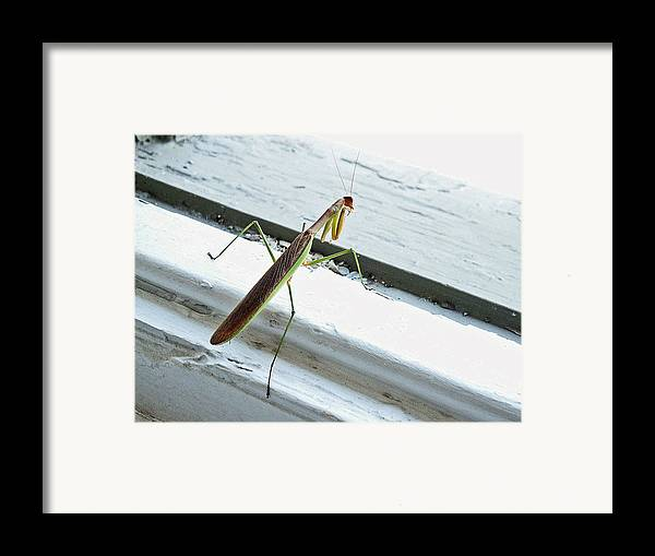Mantid Framed Print featuring the photograph Heading Out by Lisa Phillips