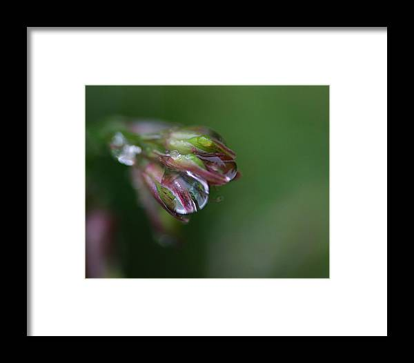 Rain Drops Framed Print featuring the photograph Heart Of Glass by Susan Capuano