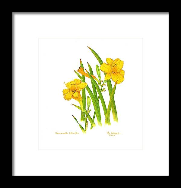 Lilies Framed Print featuring the painting Hemercoallis Stella d Oro by Bill Gehring