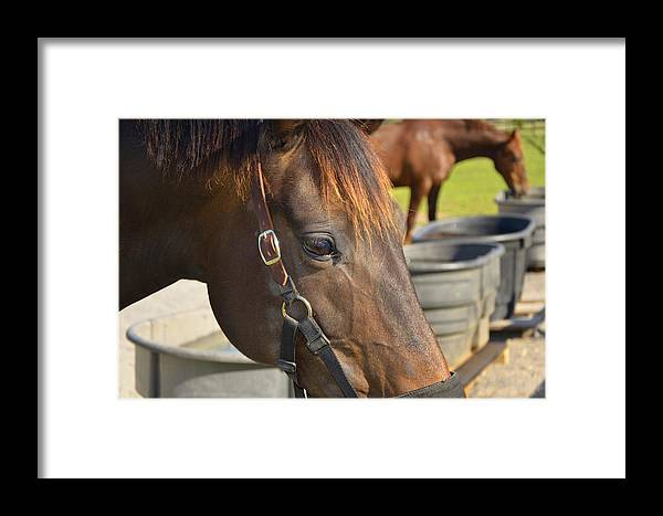 Chestnut Horse Framed Print featuring the photograph Here's Looking At You by Paul Mashburn