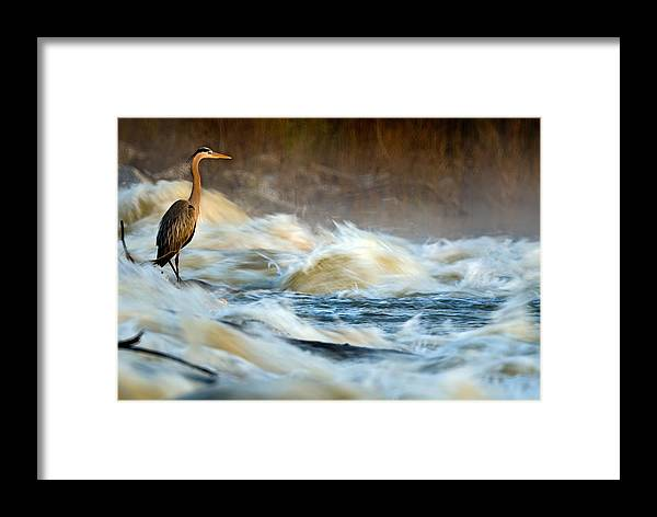 2007 Framed Print featuring the photograph Heron In Centaur Shute by Robert Charity